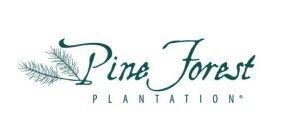 Pine Forest Plantation
