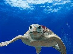 Sea Turtle Watch