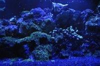 Long Bay Artificial Reef Association